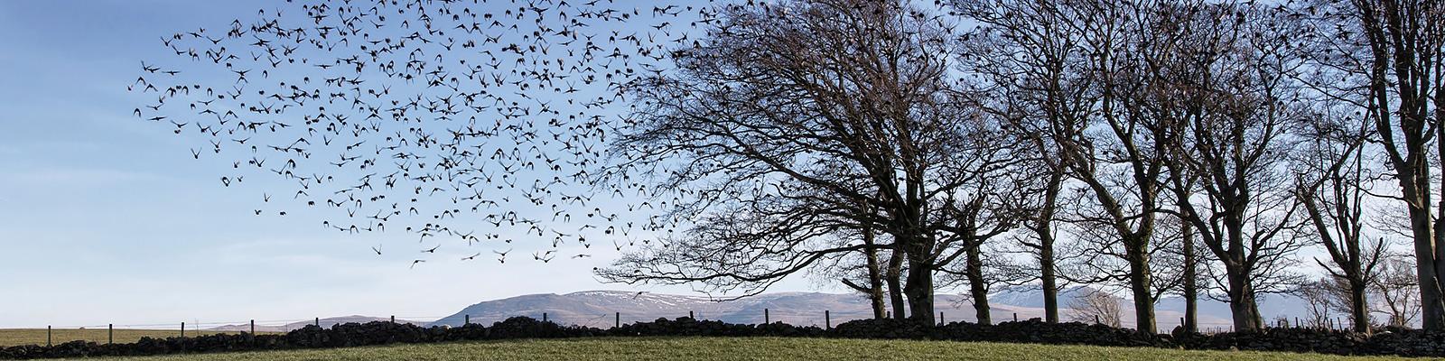 鳥 群れ 動向 イメージ
