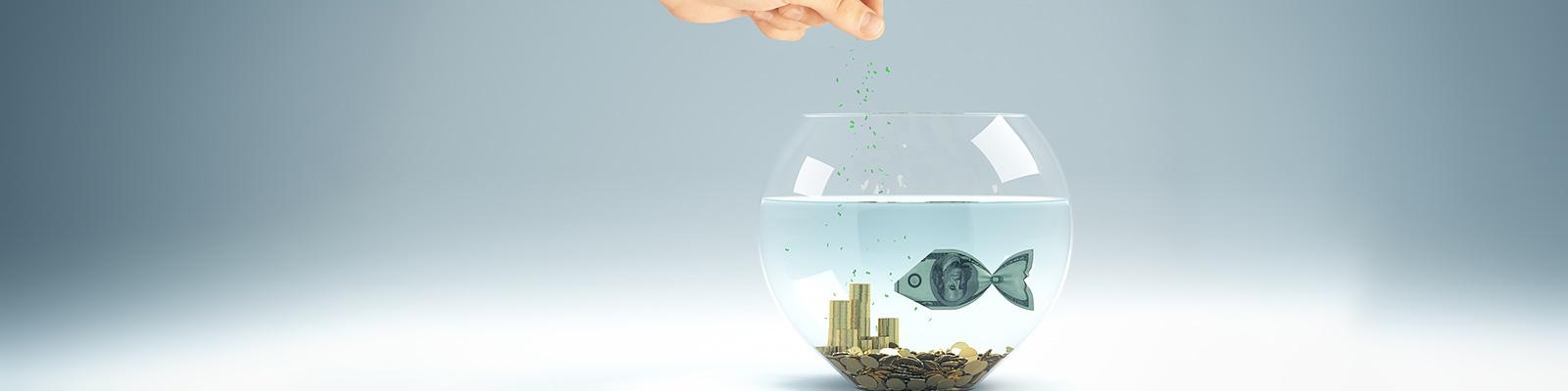 魚 お金 イメージ