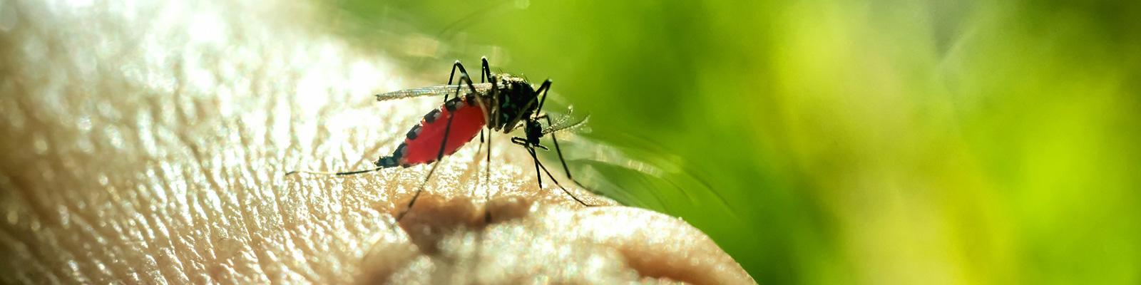 蚊 イメージ