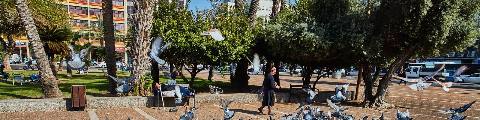 イスラエル 公園 イメージ