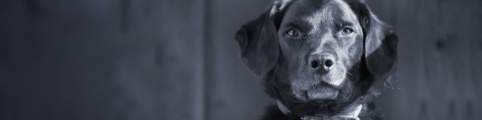 犬 顔 イメージ