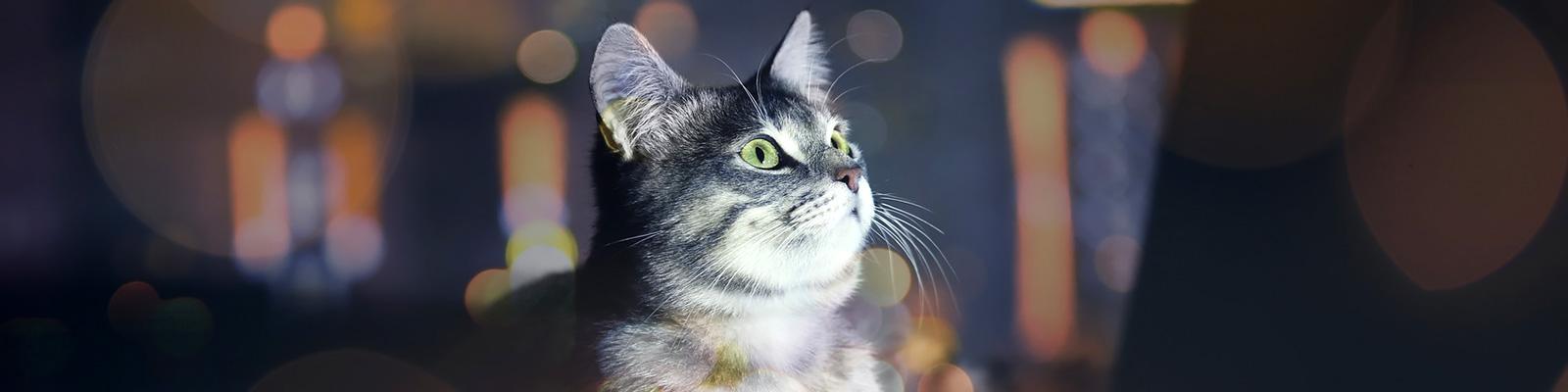 猫 ネットワーク イメージ