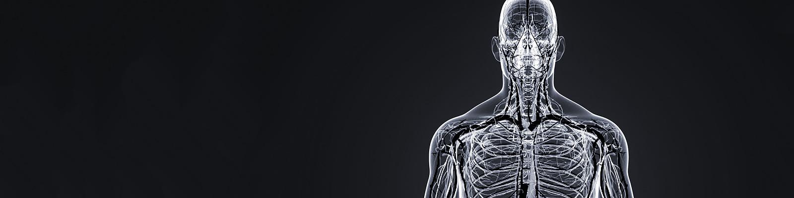 人体 体内 組織 イメージ