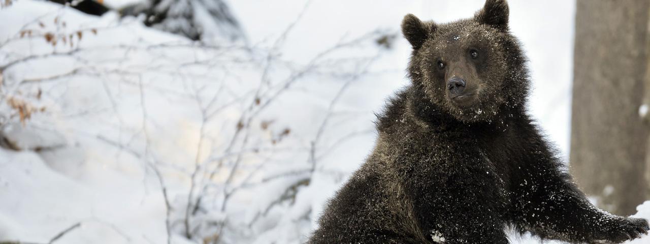 冬至ーー知られざるクマの冬眠[二十四節気のあかり]