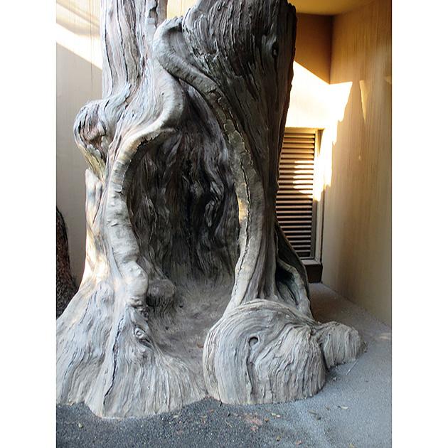 上野公園ではクマが冬眠する木のうろの中を実際に体験できます 撮影:今井明子