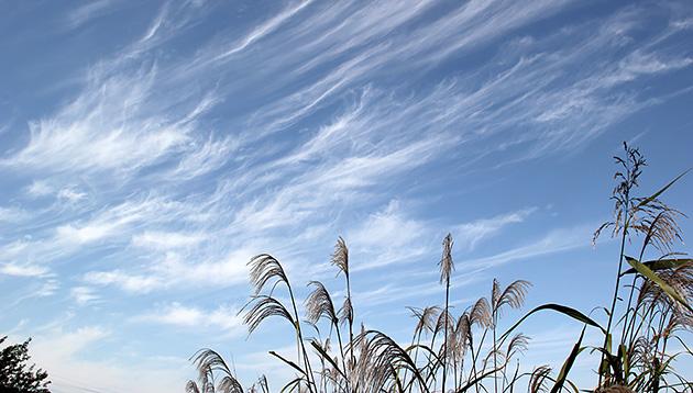 巻雲 ©岩槻秀明