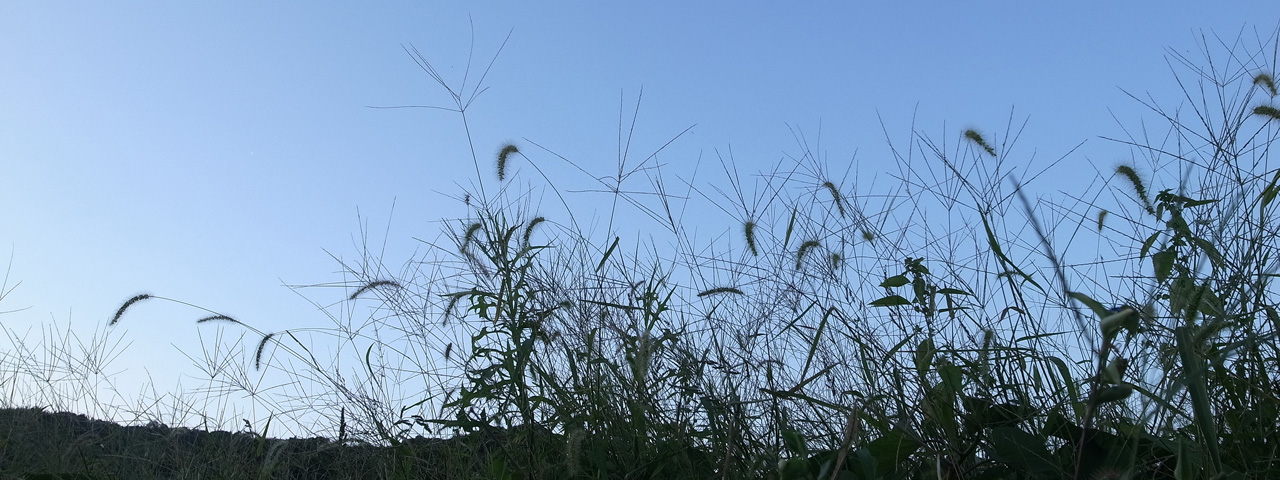 穀雨ーー驚くべき雑草の繫殖戦略[二十四節気のあかり]