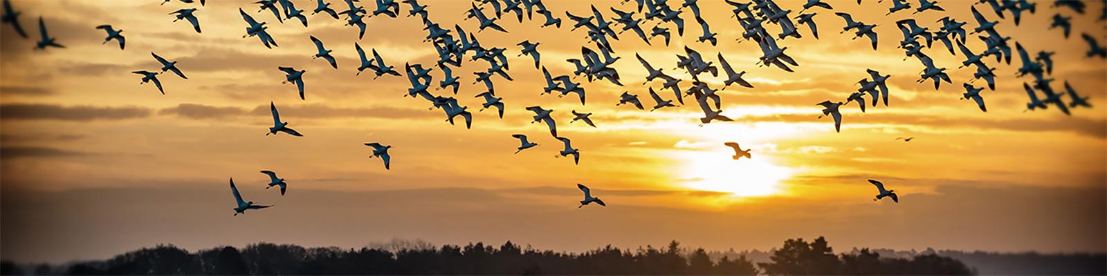 渡り鳥 イメージ