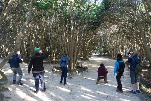 萩市笠山の椿群生林。舗装路ではない、美しい自然のままのトレイルが好評