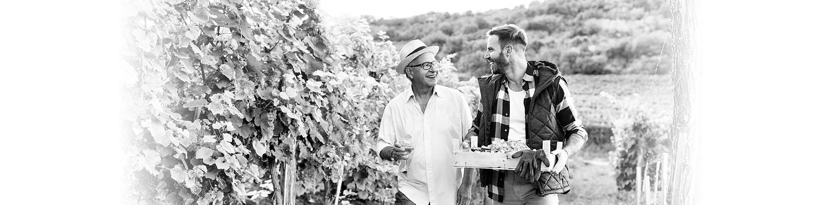 農業 ワイン カリフォルニア イメージ