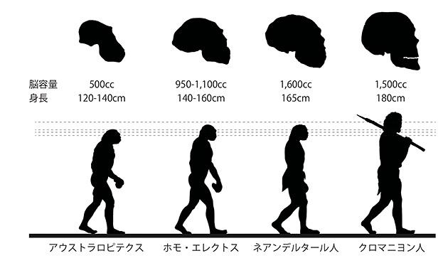 人類の進化とまなざしの高さ・脳容量の関係(「世界史詳覧」浜島書店2006改訂版の図を元に筆者作成)