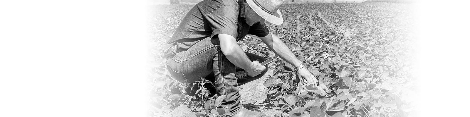 ブラジル 農家 スマートフォン イメージ