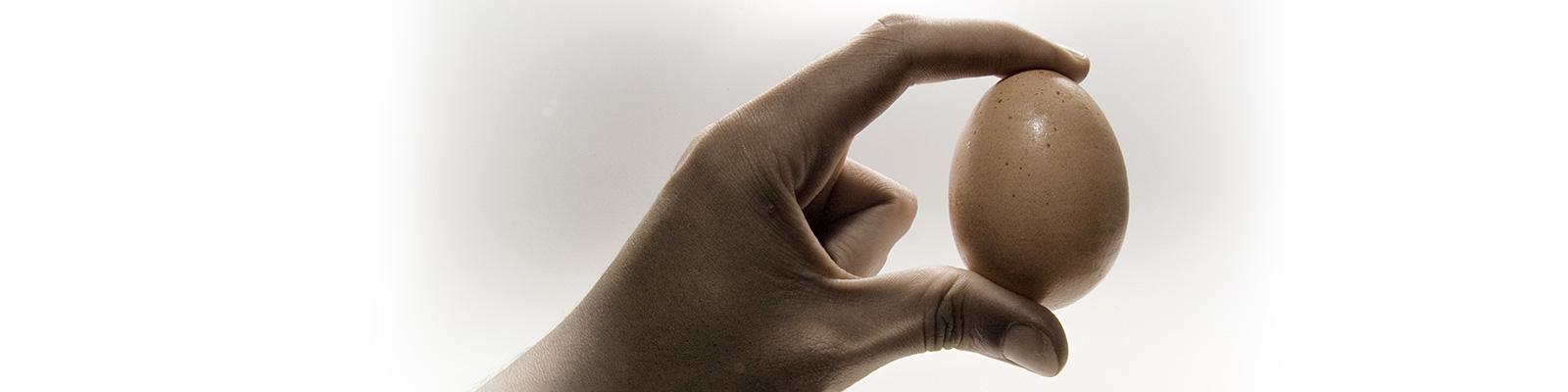 ハプティクス 卵 力加減 イメージ